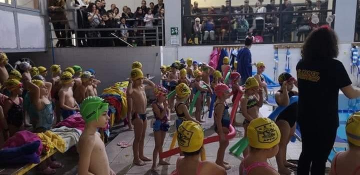 Κολύμβηση: Η χριστουγεννιάτικη γιορτή των Ακαδημιών του ΑΡΗ (photostory)